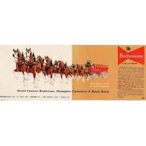 Budweiser Champion Clydesdale 8 Horse Hitch Postcard