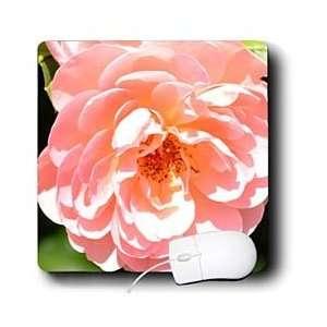 Patricia Sanders Flowers   Abundance Light Pink Rose
