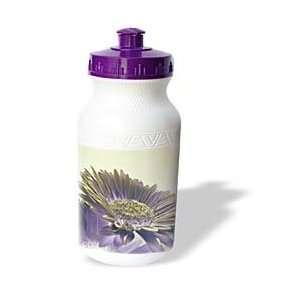Patricia Sanders Flowers   Purple Gerbera Flowers  Art