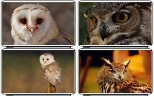 Wild Life Animals Owl Birds Laptop Netbook Skin Cover Sticker Decal